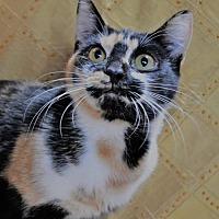 Adopt A Pet :: Dora  171807  (Hurricane) - Atlanta, GA
