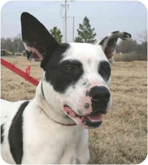 Pit Bull Terrier Dog for adoption in kennebunkport, Maine - Makenzie