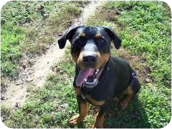 Rottweiler Dog for adoption in Earleville, Maryland - Jackson