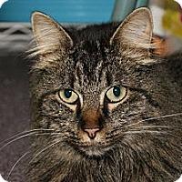 Adopt A Pet :: Margie - Memphis, TN