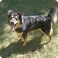 Adopt A Pet :: Remi - Eden, NC