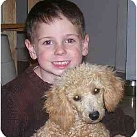 Adopt A Pet :: Chevy - Evansville, IN