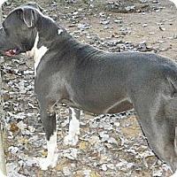 Adopt A Pet :: Louie - York, SC