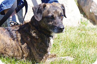 Terrier (Unknown Type, Medium) Mix Dog for adoption in Elyria, Ohio - Chevy