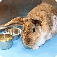 Adopt A Pet :: *LACEY* - Salt Lake City, UT