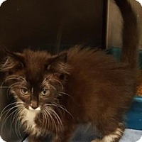 Adopt A Pet :: Checkers - Americus, GA