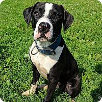 Adopt A Pet :: Billy Gene - Lisbon, OH