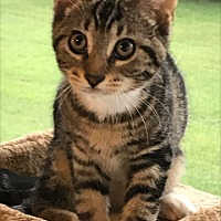 Adopt A Pet :: Tilley - Carlisle, PA