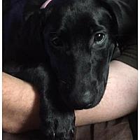 Adopt A Pet :: Bailey - Killian, LA
