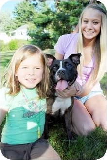 American Pit Bull Terrier Mix Dog for adoption in Trucksville, Pennsylvania - Fendi*