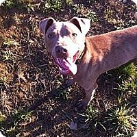 Adopt A Pet :: Wesley - Nashville, TN