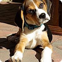 Adopt A Pet :: Charmin - Portland, OR
