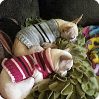 Adopt A Pet :: Boris & Natasha - Hagerstown, MD