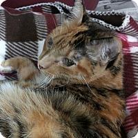 Adopt A Pet :: Cassie - New Orleans, LA