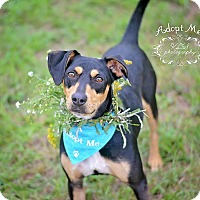 Adopt A Pet :: Piper - Fort Valley, GA