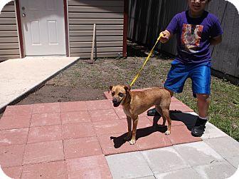 Boxer/Spaniel (Unknown Type) Mix Dog for adoption in San Antonio, Texas - Velma