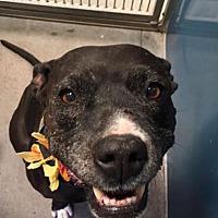 Adopt A Pet :: Gracie May - Scottsdale, AZ