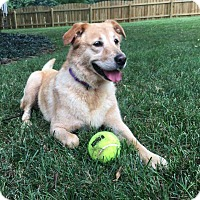 Adopt A Pet :: Mollie - Knoxville, TN