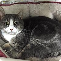 Adopt A Pet :: April - Chambersburg, PA