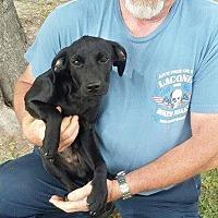 Adopt A Pet :: Rowdy - Sumter, SC
