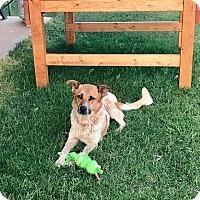 Adopt A Pet :: Siana - Snyder, TX