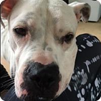 Adopt A Pet :: Jax - Nashville, TN