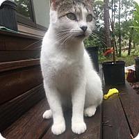 Adopt A Pet :: Marcara - Wilmington, NC