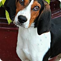 Adopt A Pet :: Billy Bob - Palmyra, PA