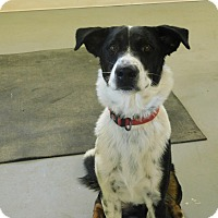 Adopt A Pet :: Brody - Ridgway, CO