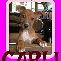 Adopt A Pet :: CARLI - Albany, NY