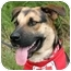 Photo 1 - German Shepherd Dog Mix Dog for adoption in Athens, Georgia - Sparky