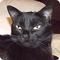 Adopt A Pet :: Luna - Huntley, IL