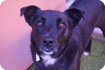 Labrador Retriever Mix Dog for adoption in Farmington, New Mexico - Candy