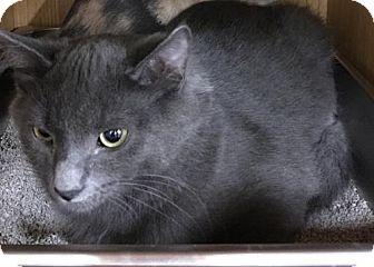 Domestic Mediumhair Kitten for adoption in Dahlgren, Virginia - Gruyere