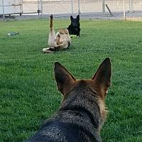 Adopt A Pet :: Rosco - Martinez, CA