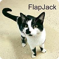 Adopt A Pet :: Flapjack - Waverly, NY