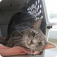 Adopt A Pet :: Molly $25 to adopt - North Richland Hills, TX