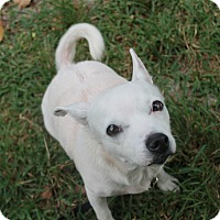 Adopt A Pet :: Angel - Boca Raton, FL