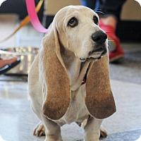Adopt A Pet :: Peggy Sue - Grapevine, TX