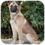 Photo 2 - German Shepherd Dog Mix Puppy for adoption in West Los Angeles, California - Jessica