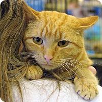 Adopt A Pet :: Burton - Pittstown, NJ