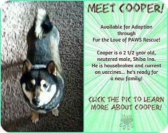 Shiba Inu Dog for adoption in North Platte, Nebraska - Cooper