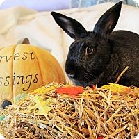 Adopt A Pet :: Marcus - Hillside, NJ