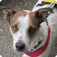 Adopt A Pet :: Stitch - Adoption Pending - Gig Harbor, WA