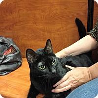 Adopt A Pet :: Honey - Cranford/Rartian, NJ