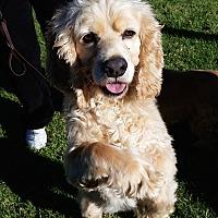 Adopt A Pet :: Scooter - Santa Barbara, CA