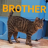 Adopt A Pet :: Brother - Colfax, IL