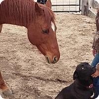 Adopt A Pet :: Kearny - Evergreen, CO
