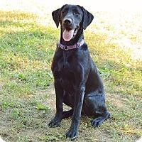 Adopt A Pet :: Schug - Pleasant Plain, OH