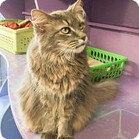 Adopt A Pet :: Schmegal (Bella) - Northbrook, IL